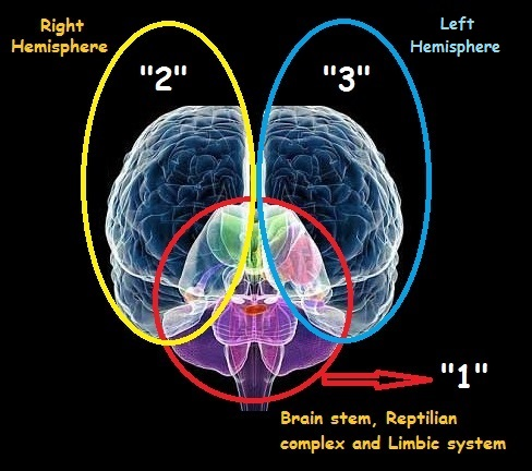 Frontal view of brain image 2
