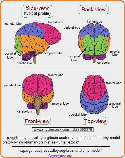 Multiple views of the brain