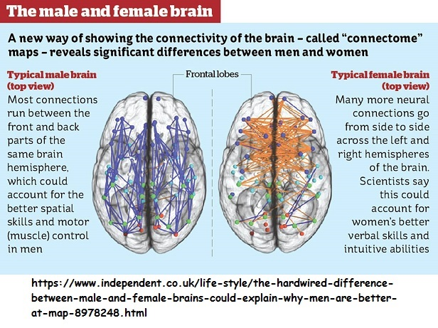 Differences between male and female brains