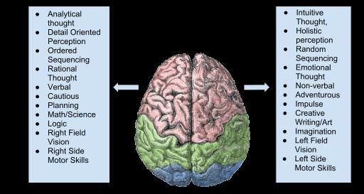 Left brain and right brain model