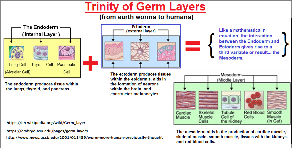Germ layers viewed as a trinity