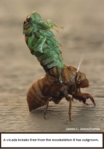 cicada (40K)