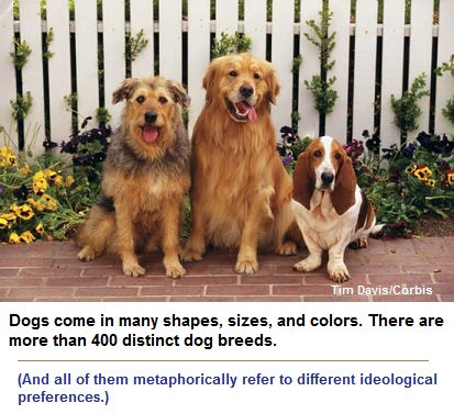 Domesticated dogs retain feral instincts