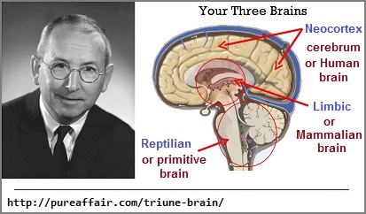 The Triune Brain Theory of Paul D. MacLean