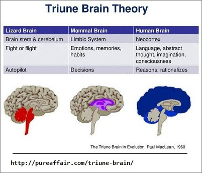 Triune Brain Theory image 2