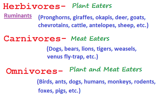 3 feeding types (14K)