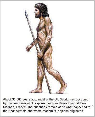 H.sapiens