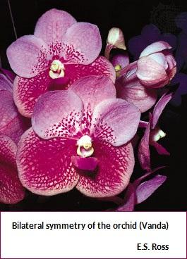 Orchid flower (47K)