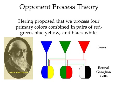 Hering's Opponent Process Theory
