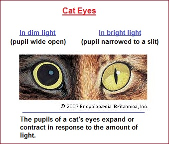A flexible pupil seen in cat eyes