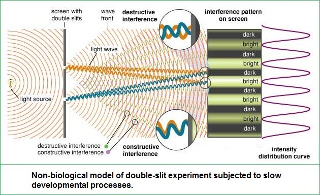 Non-biological model of double-slit experiment