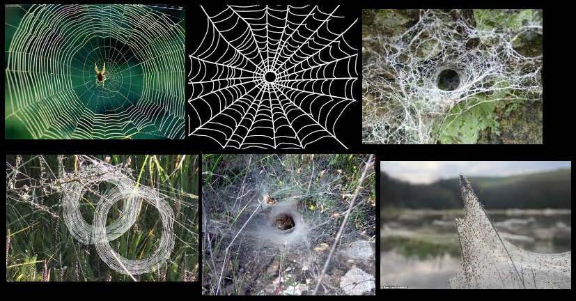 Various examples of spider webs